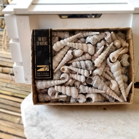 Kagyló dobozban 15x20x6 cm 860 gr fehér 28606010